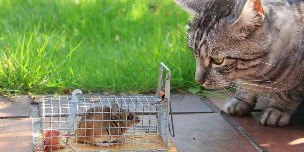 7 Methods to easily get rid of mice from the house