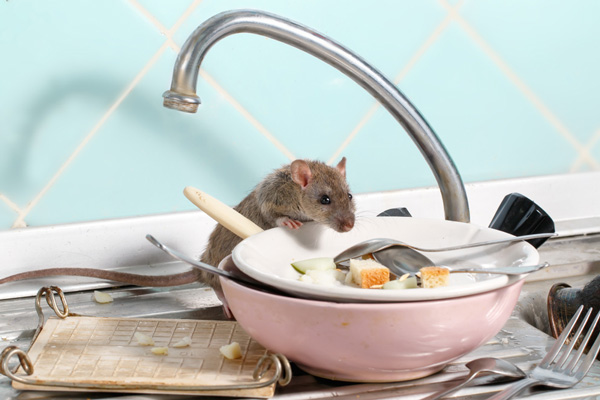 Keep rats away from home