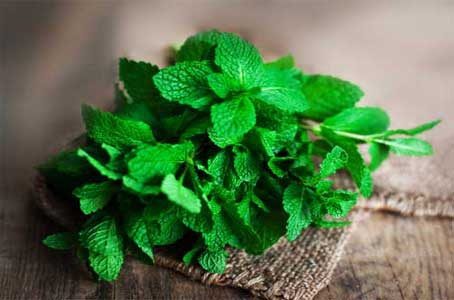 basil and peppermint leaves paste recipe